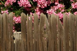 Grapestake wood fence with pink blossoms behind